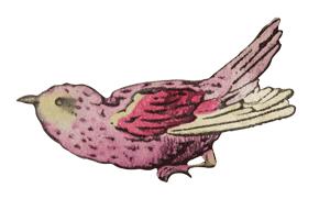 perroquet02det